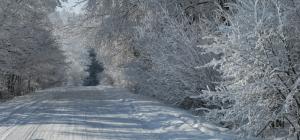 Idealna leśna droga